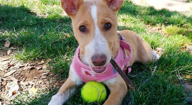 El Edén para cualquier tipo de mascota. :D, dog sitter à Nueva andalucia