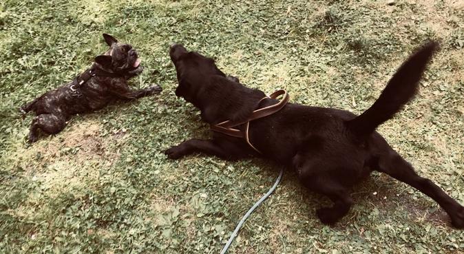 Liebe, riesen Freude, Kommandos, Park um die Ecke!, Hundesitter in köln