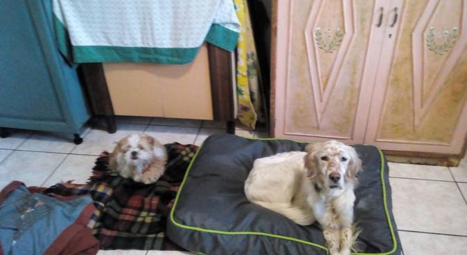 Da Zia Jessica e Lady come a casa :-), dog sitter a Selargius
