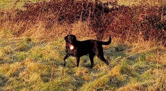 Luna's loving fun house!, dog sitter in Hornchurch