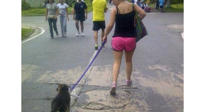 Cuidado especial y recreación para tu mascota, canguro en La Coruña