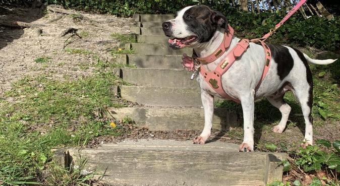 EdenWell Dog Services!, dog sitter in Ashford, UK