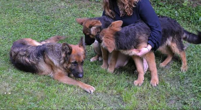 Au paradis du chien - titulaire du CCAD, dog sitter à Courbevoie