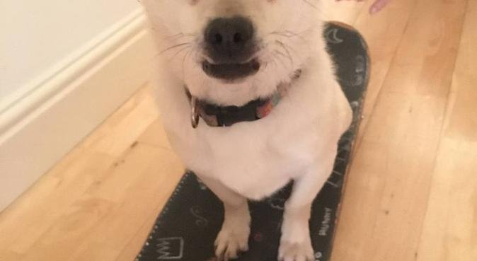 Luxury care, training and walking in Highgate., dog sitter in London