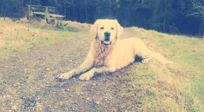 Friendly tails - Bradford, dog sitter in Bradford