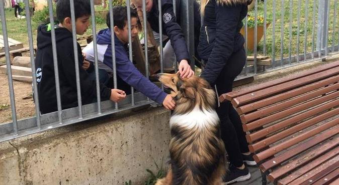 #Edéndeensueño, para perros cariñosos y activos(:, canguro en Vitoria-Gasteiz