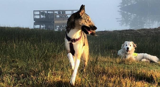 The active dog whisperer, hundvakt nära Mölnlycke, Sverige