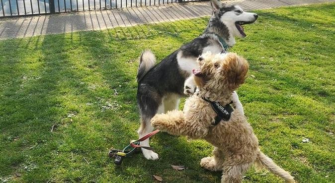 Experienced, trained and passionate dog sitter 💕, dog sitter à London