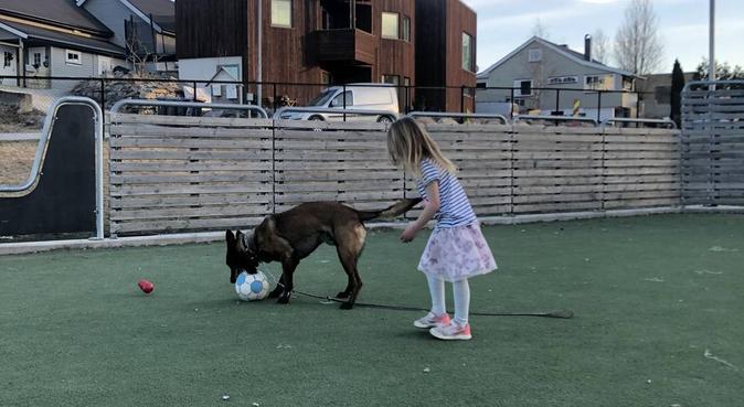 Ubegrenset kos og lek ⭐️, hundepassere i Hamar
