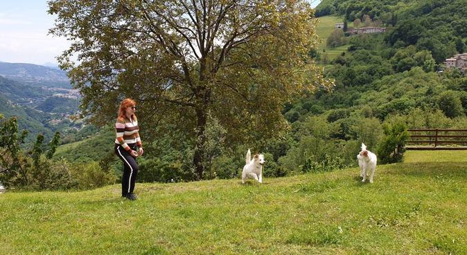 Cure, coccole, giochi e passeggiate ai 4 zampe!, dog sitter a Roncola