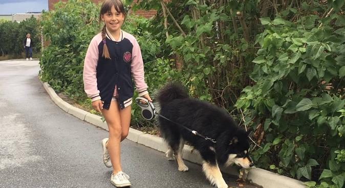 Familj söker hundar att få ta hand om, hundvakt nära Nacka