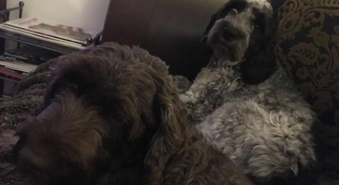Lots of cuddles and playtime in comfortable home, dog sitter in Watford
