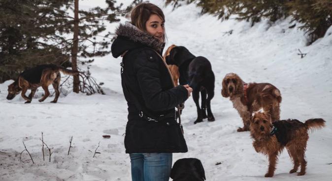 Garde canine d'expérience proche Montpellier Nord, dog sitter à Montpellier, France