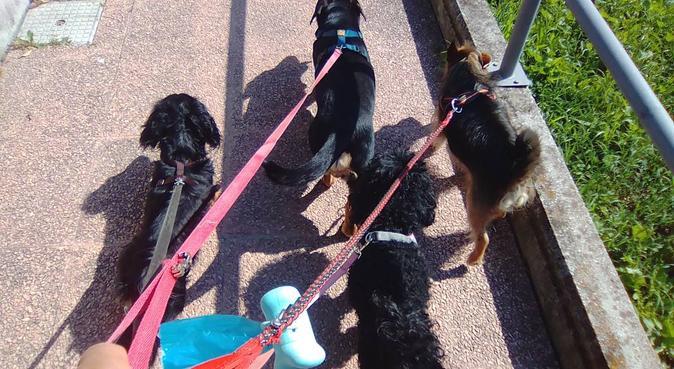 Passeggiate e pensione casalinga in mezzo al verde, dog sitter a Trebbo di Reno