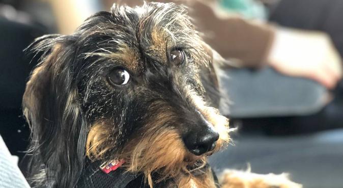 Dog Paradiz' :D Chez June et Aurelie, dog sitter à LEVALLOIS PERRET
