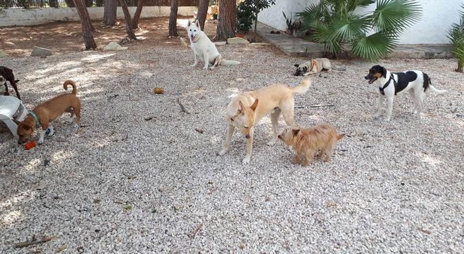 Tus perros disfrutarán a sus anchas y en libertad, canguro en Orihuela costa