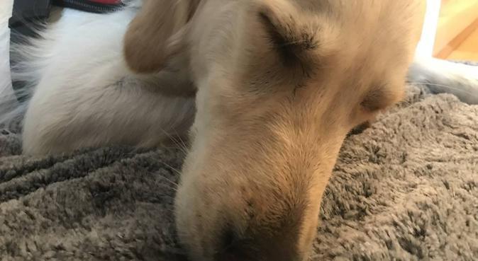Dog Lover in Stockholm, hundvakt nära Stockholm