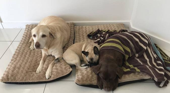 Doggy day care, dog sitter in South Benfleet, Benfleet, UK