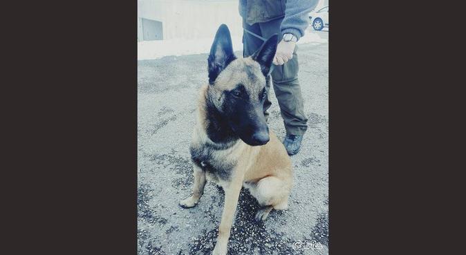 Le Paradis des Câlins de nos animaux a Grenoble, dog sitter à Fontaine