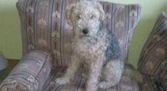 L'amie des animaux !, dog sitter à Reims