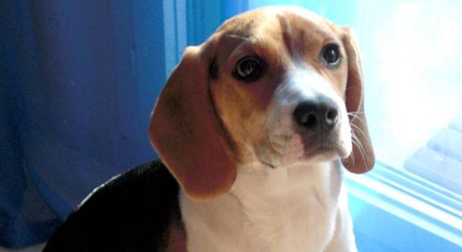 La meilleure promeneuse de chiens du Var ;-), dog sitter à Garde