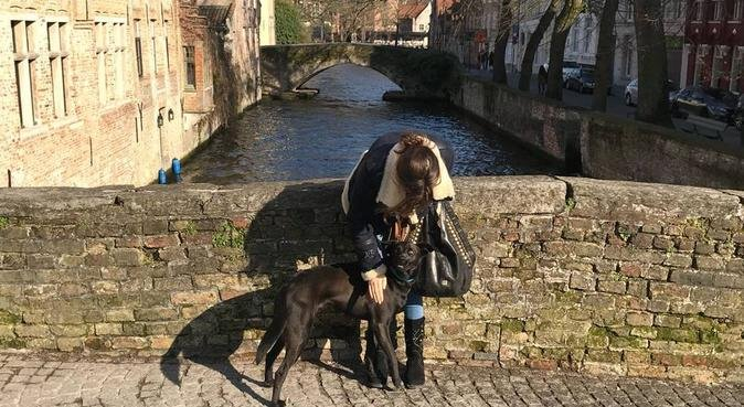 Trustworthy dog lover with experience, hondenoppas in Amsterdam