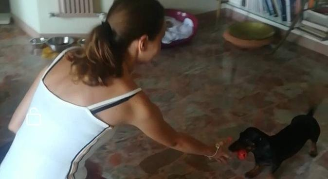Divertimento e coccole 🐶, dog sitter a Genova