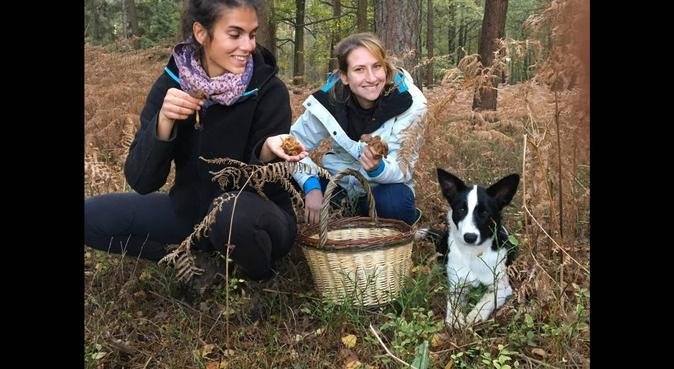 Des ballades dynamiques ou paisibles au château, dog sitter à Versailles
