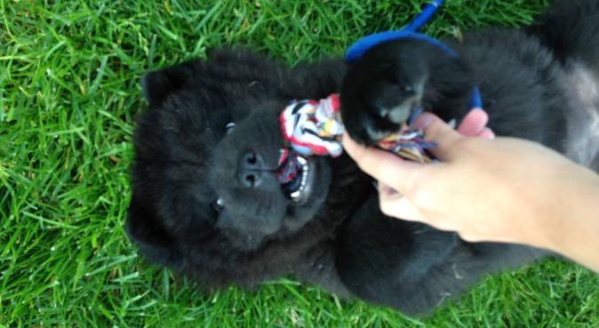 Gåglad hundeelsker vil ha nye venner, hundepassere i Oslo