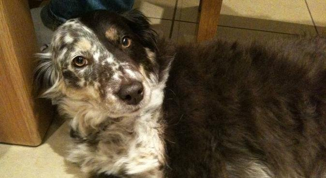 Rosie's Walk, dog sitter in Nottingham