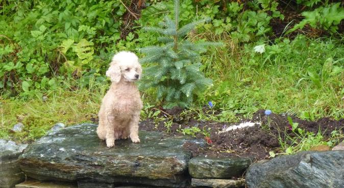 Hund er bra for kropp og sinn, hundepassere i Godvik