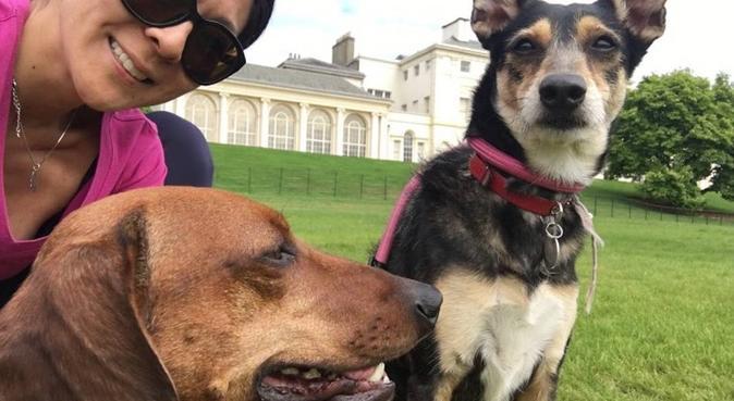 Boarding and Day Care in Harrow, dog sitter in Harrow, UK