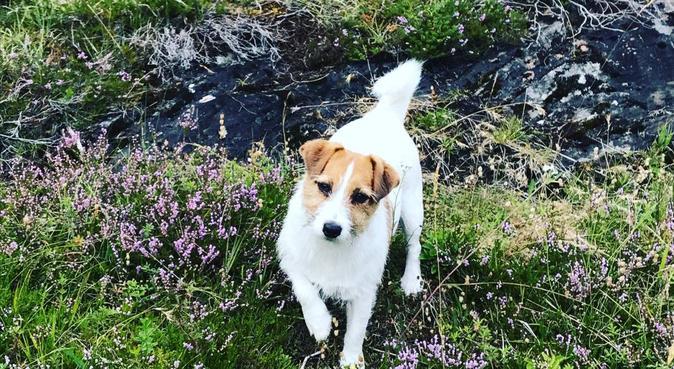Kos, tur og lek med min Jack russel, hundepassere i Oslo