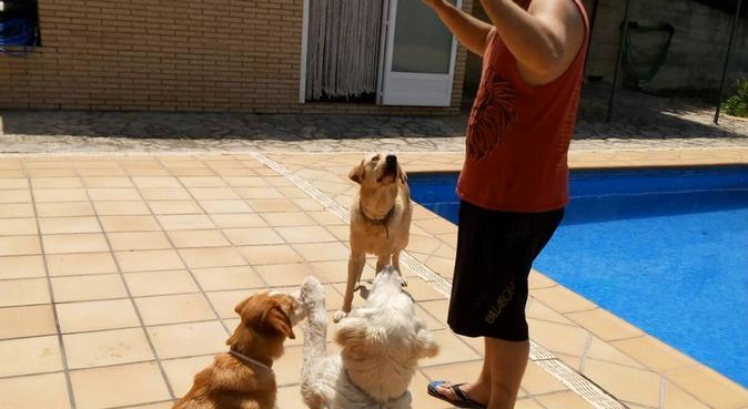 Casa y jardín para tus perr@s, canguro en Navarclés