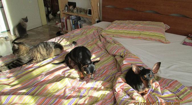 Toelettatrice in pensione accudisce i tuoi cani :), dog sitter a Bologna
