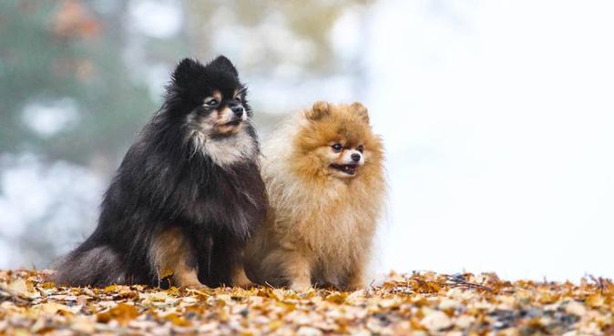 Hundens bestevenn, hundepassere i Kristiansand, Norge