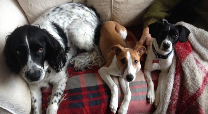 Wicked Walkies, dog sitter in Southampton, UK