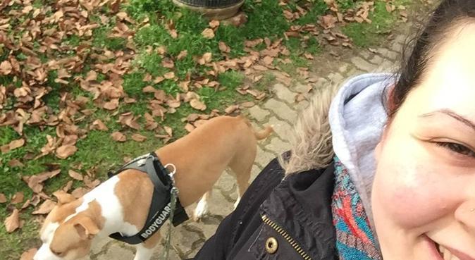 Passeggiate lunghe o corte, basta divertirsi!, dog sitter a Verona