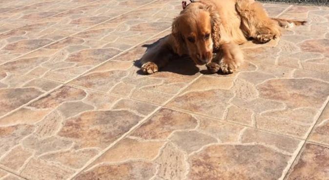 La casa de tus mascotas, canguro en Leganés, España