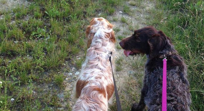 compagnia e affetto per il tuo amico a 4 zampe!, dog sitter a Padova