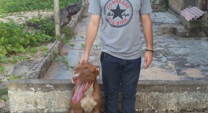 El mejor paseo de tu perro, canguro en Tenerife, España