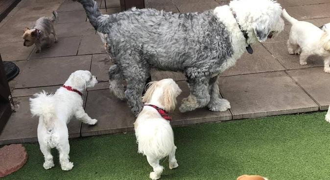 Home from home comfort and care, dog sitter in Newport, UK