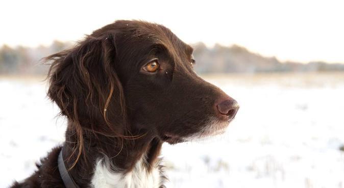 Kärleksfull och pålitlig hundpassning, hundvakt nära Halmstad