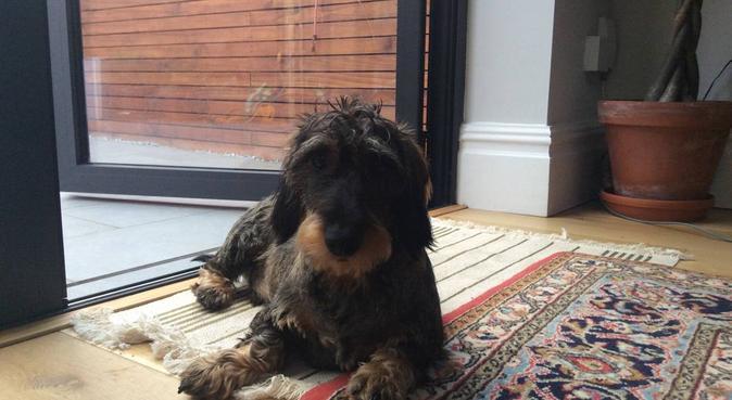 Who's a good boy!, canguro en London Borough of Wandsworth