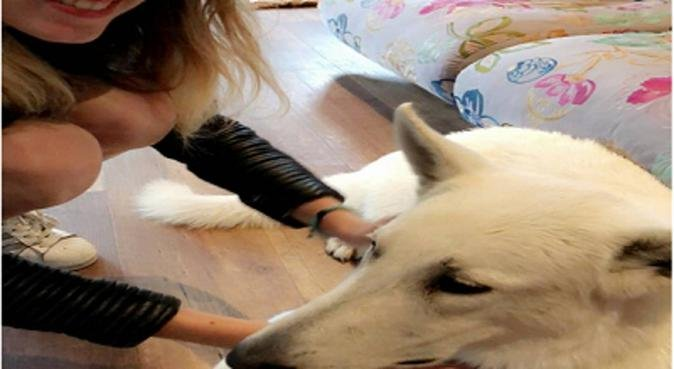 A french Dogsitter for your precious dog !, hondenoppas in Amsterdam