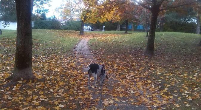 Promenades actives et visites attentionnées, dog sitter à Grenoble