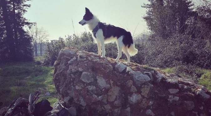 Un petit cocon pour rendre vos chiens heureux, dog sitter à Mérignac