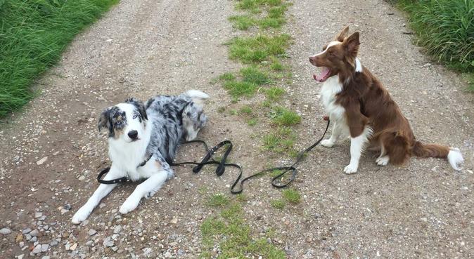Ervaren en flexibele hondenoppasser, hondenoppas in rotterdam