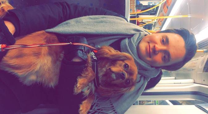 Engasjert, sosialt og elskverdig forhold til hund!, hundepassere i Oslo