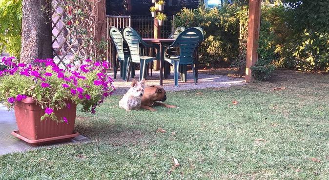 A casa con gli zii., dog sitter a Reggio Emilia